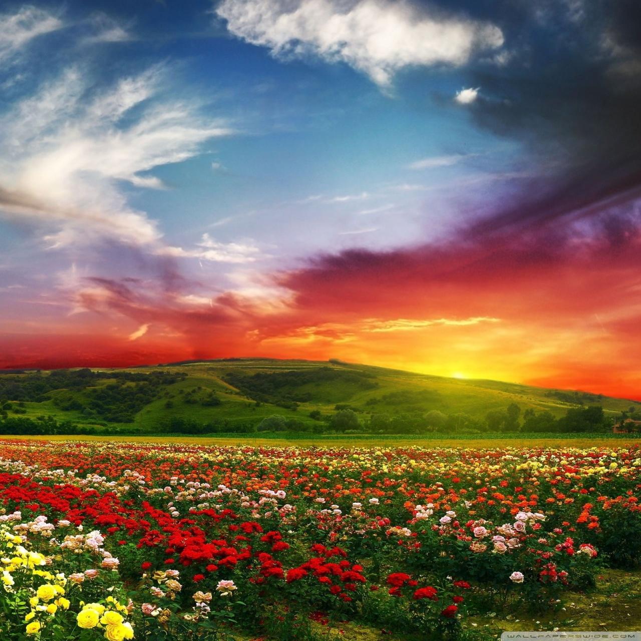 Gorgeous Fall Wallpaper Spellbinding Sunset 4k Hd Desktop Wallpaper For 4k Ultra