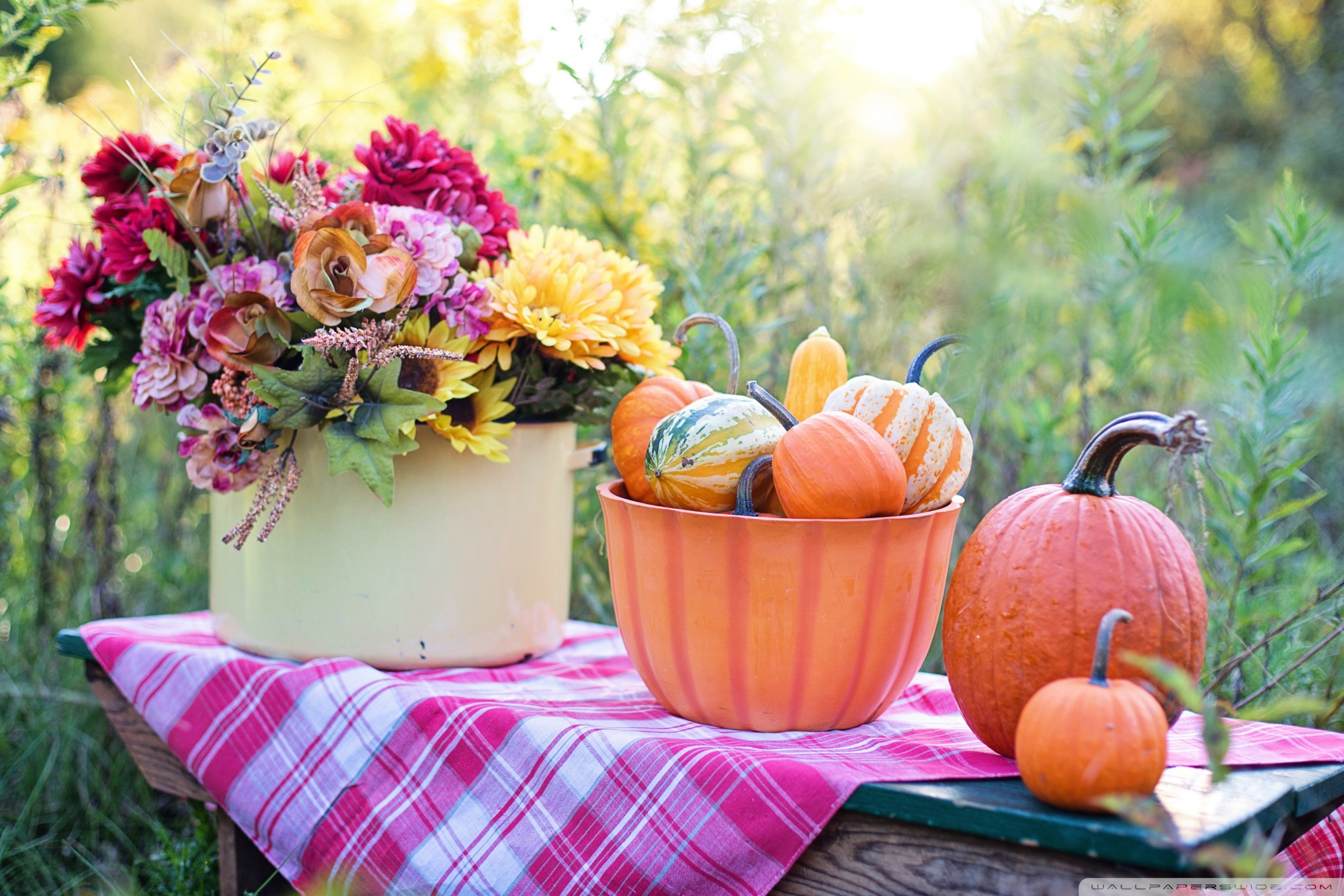 Fall Harvest Wallpaper 1024x768 Still Life Pumpkins In Bowl Flowers Early Autumn 4k Hd
