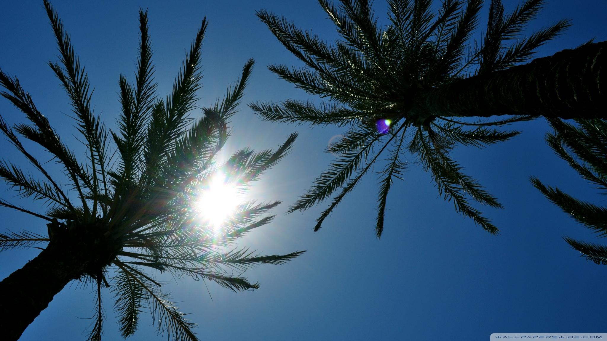 Cute Palm Tree Wallpaper Sunlight Through Palm Trees 4k Hd Desktop Wallpaper For 4k