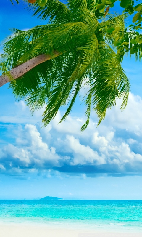 Cute Animated Wallpapers For Mobile Tropical Beach Resorts 4k Hd Desktop Wallpaper For 4k
