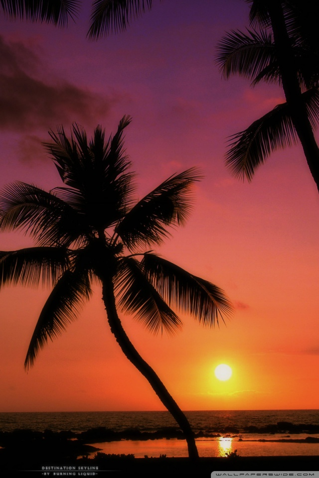 Iphone Wallpaper Reddit Tropical Sunset 4k Hd Desktop Wallpaper For 4k Ultra Hd Tv