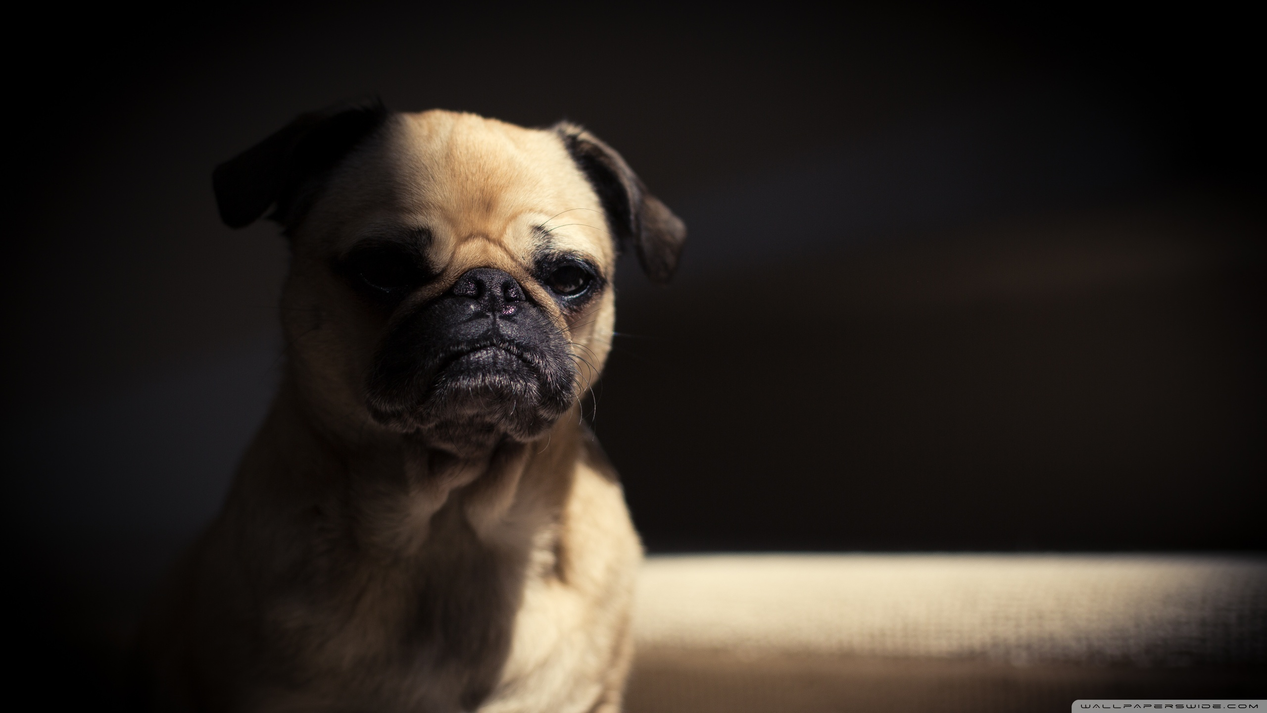 Cute Wallpaper For Ipad Mini 2 Very Sad Pug Dog 4k Hd Desktop Wallpaper For 4k Ultra Hd