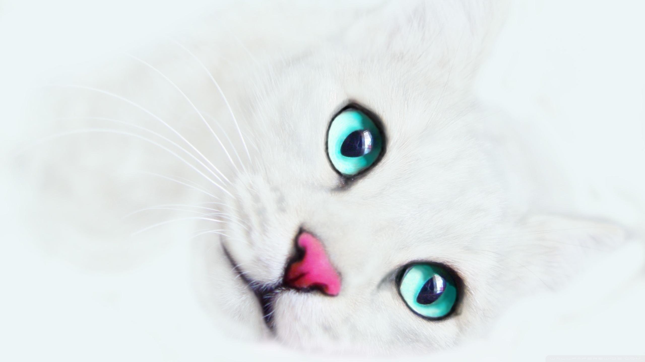 Cute Teddy Bears Wallpapers Hd White Cat Background 4k Hd Desktop Wallpaper For 4k Ultra