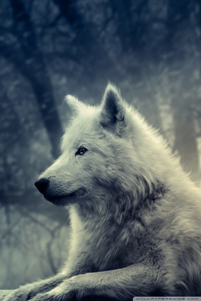 Cute Hd Wallpapers 1080p Widescreen White Wolf Painting 4k Hd Desktop Wallpaper For 4k Ultra