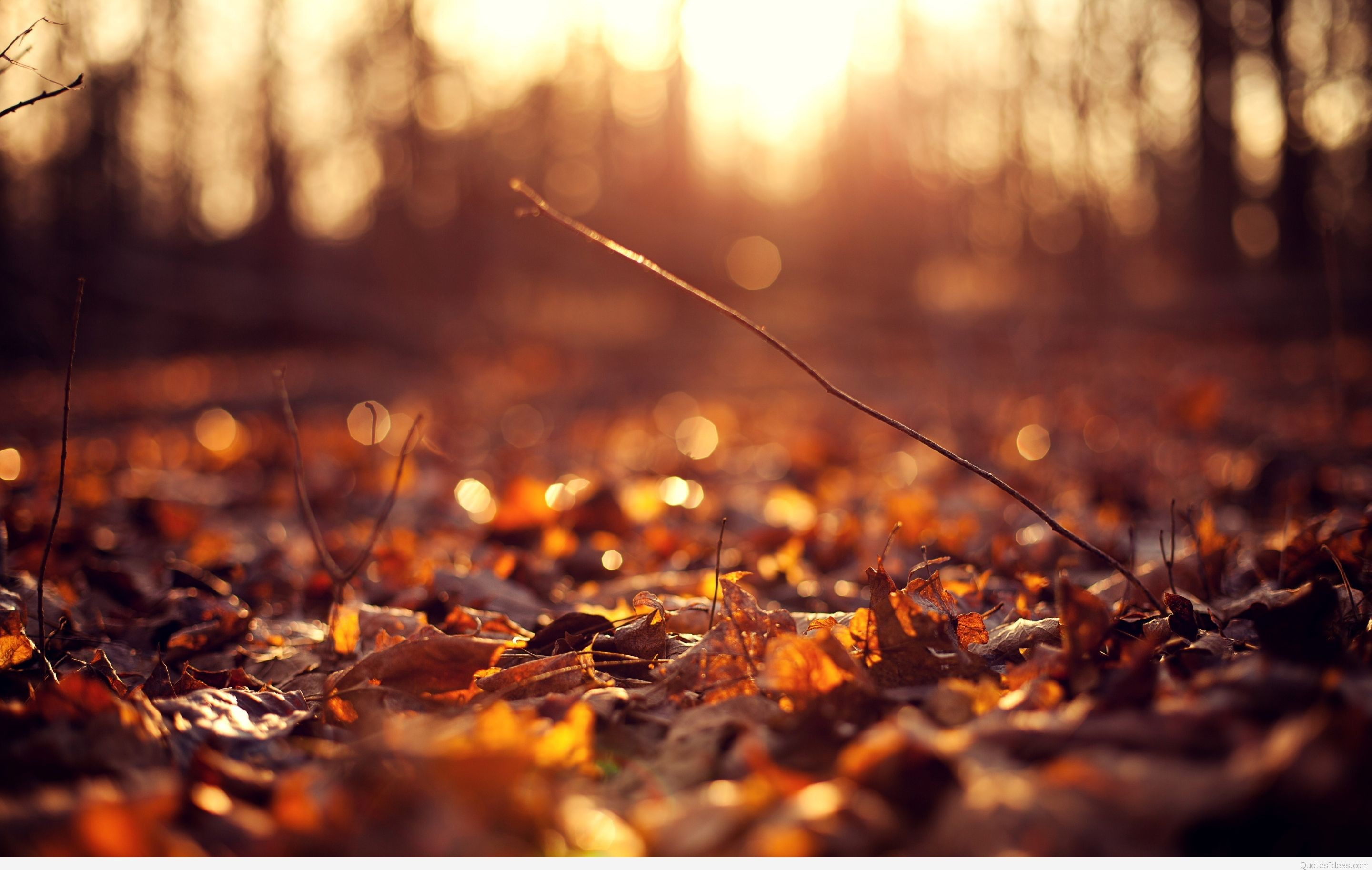 Autumn Leaves Falling Hd Wallpaper Autumn Leaves Background 183 ① Download Free Awesome High