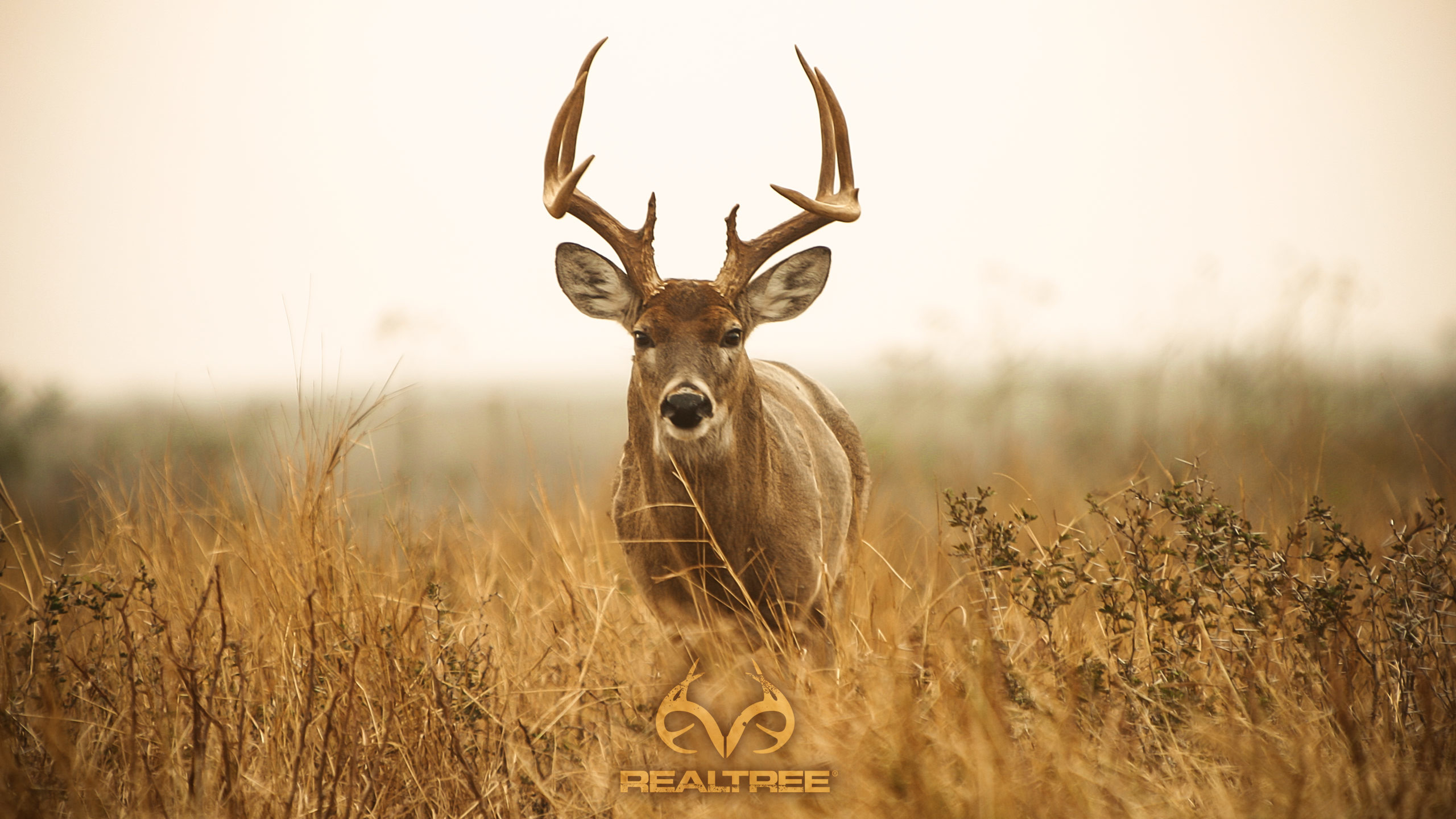 Iphone X Wallpaper With Border Deer Hunting Backgrounds 183 ①