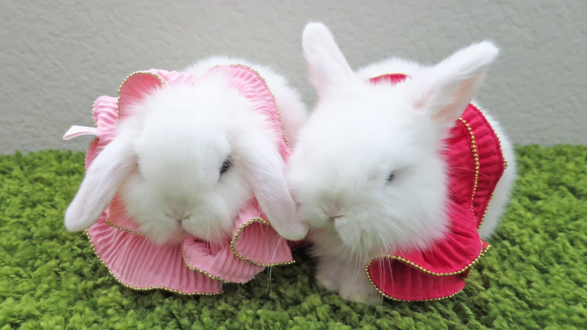 Lovely Baby Girl Wallpapers Baby Bunny Wallpaper 183 ①