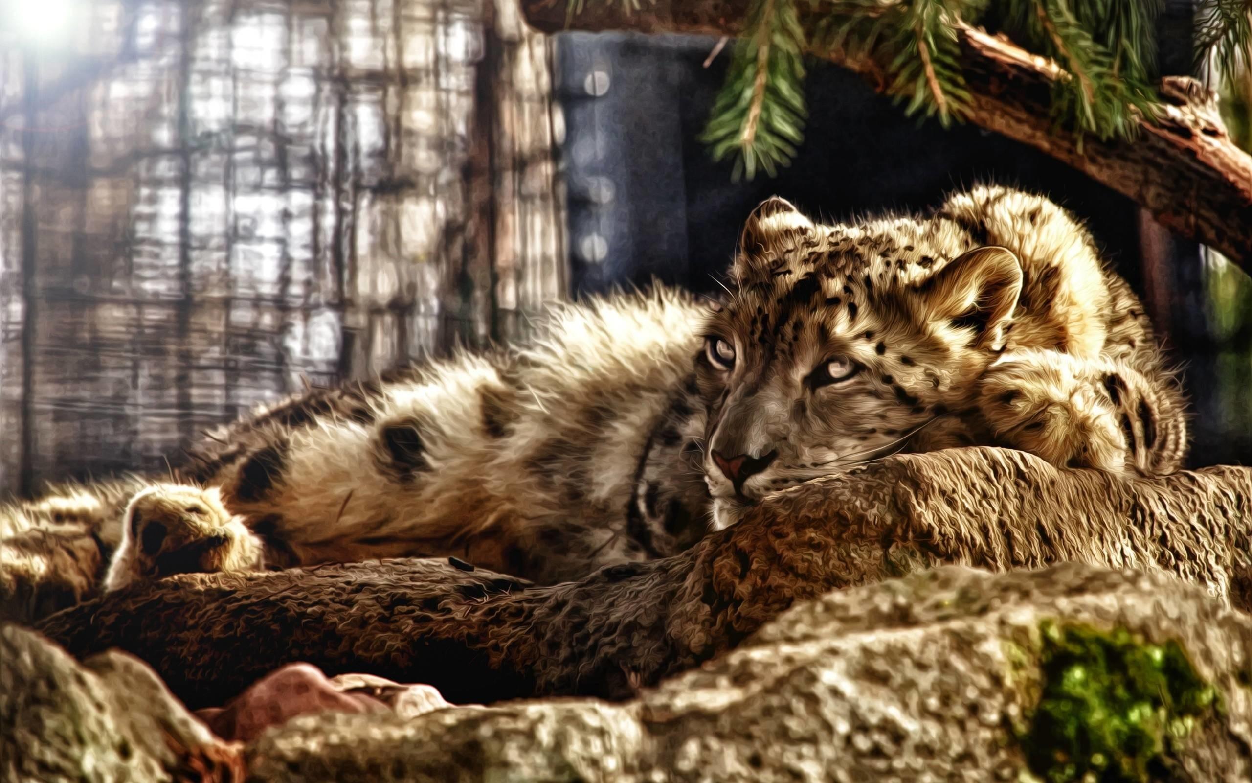 Cheetah Wallpaper Hd Wild Cat Wallpapers 183 ①
