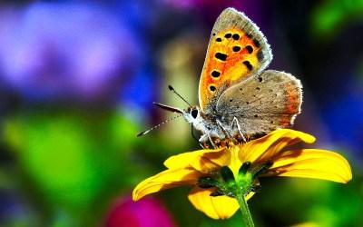 Butterfly wallpaper ·① Download free beautiful full HD ...