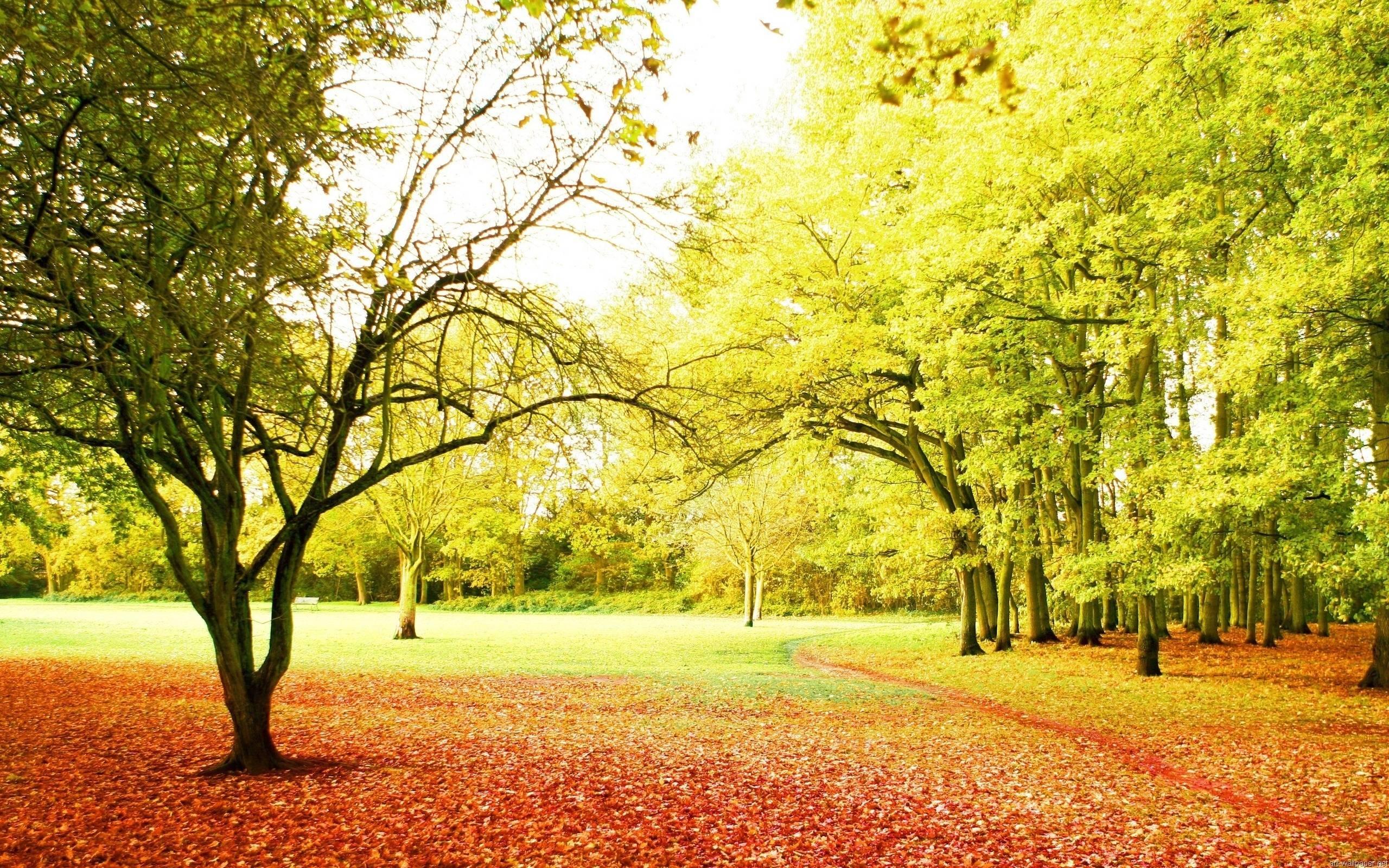 Beautiful Nature Background 1