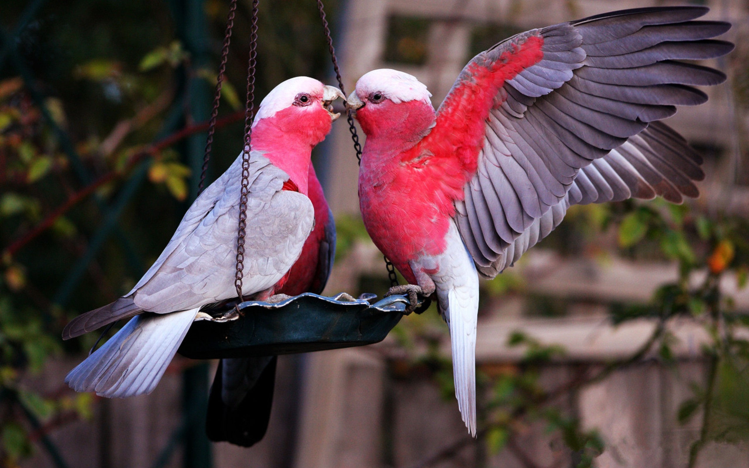 Cute Couple Phone Wallpaper Lovebird Wallpaper 183 ①