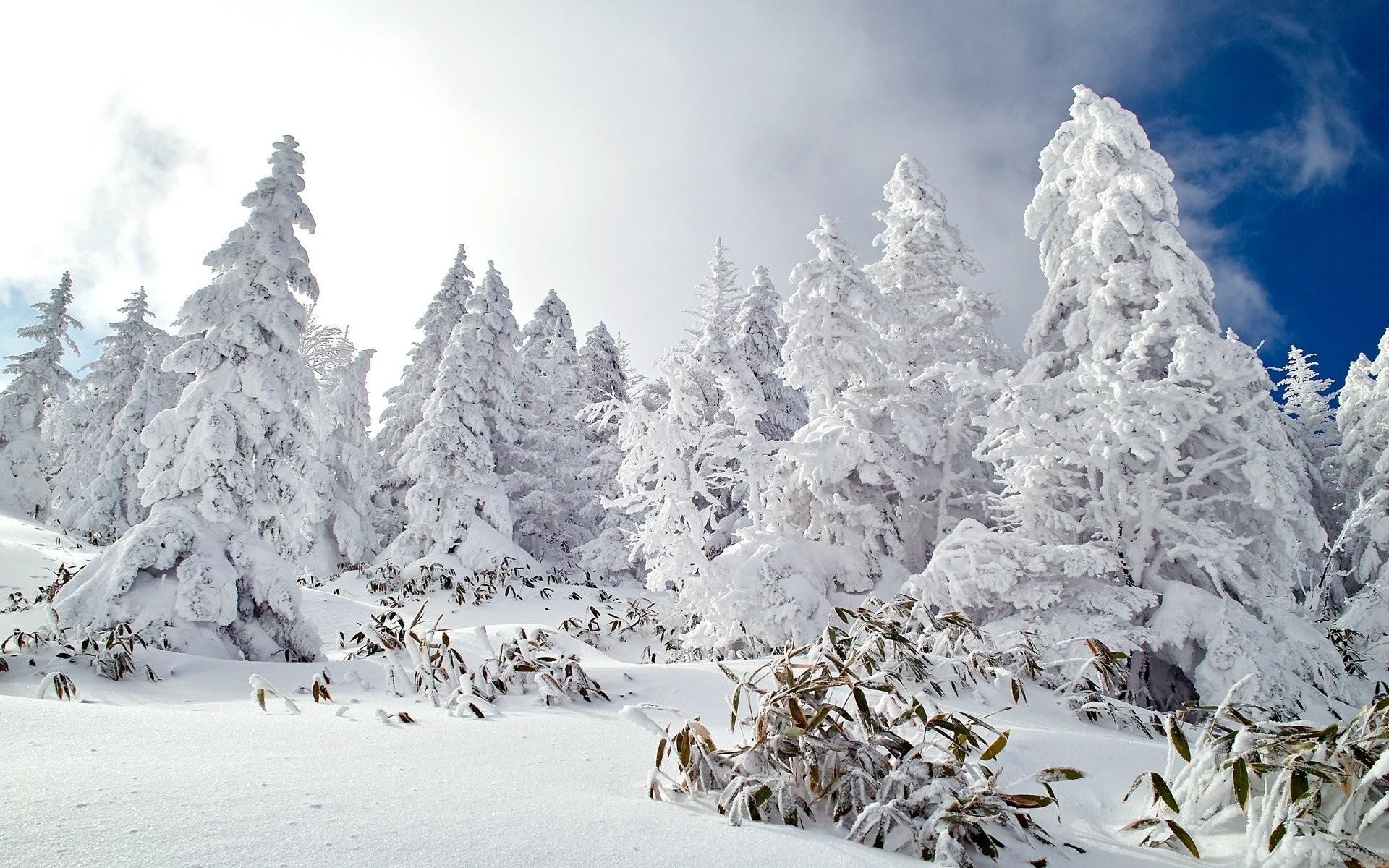 Christmas Wallpaper Snow Falling Beautiful Snow Wallpapers 183 ①