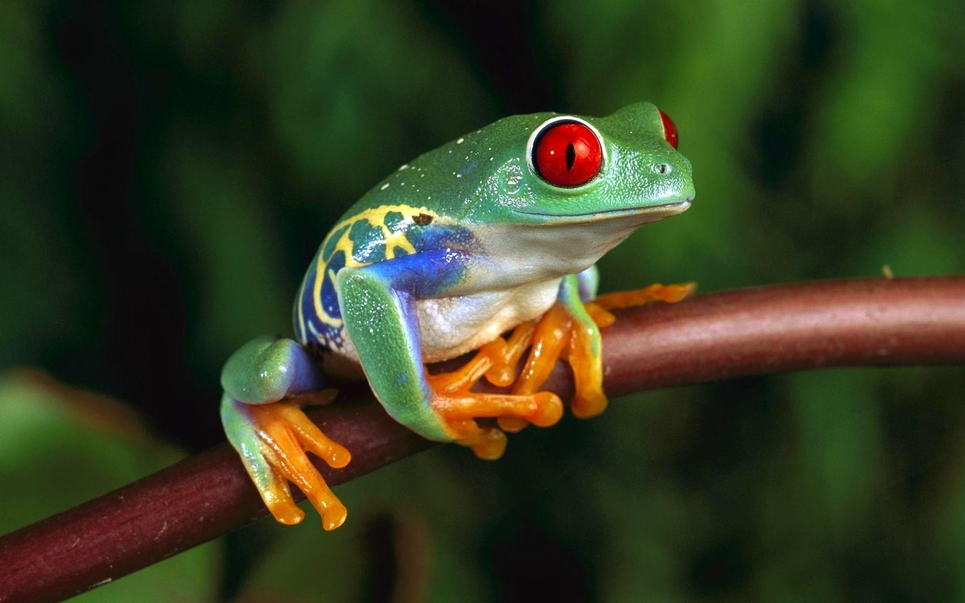 Cute Guitar Wallpaper For Mobile Funny Frog Wallpaper 183 ①