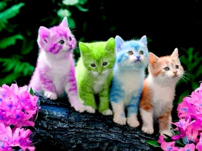 Cute Kitten Wallpapers ·①