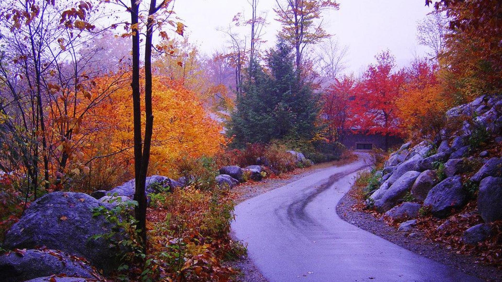 Fall Colors Wallpaper New England New England Fall Wallpaper 183 ①