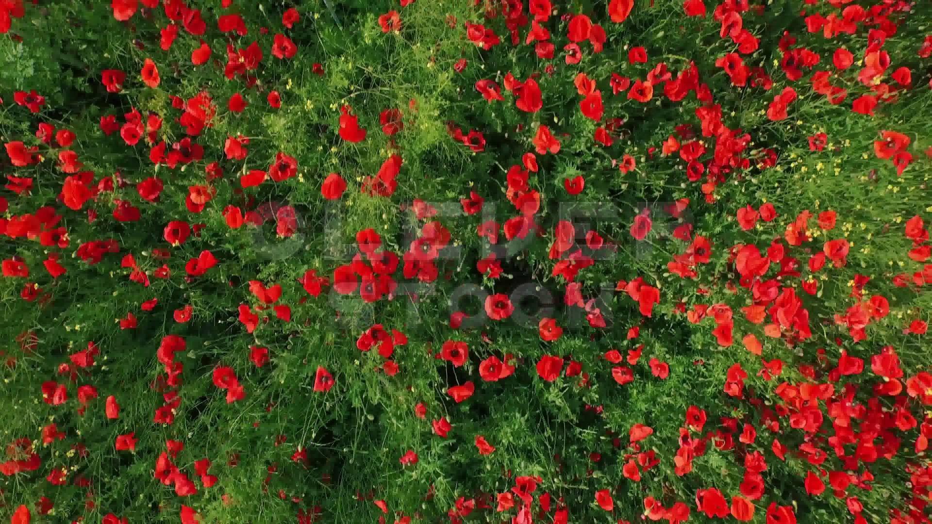 Freddy Krueger Wallpaper 3d Vintage Flower Background 183 ① Download Free Amazing High