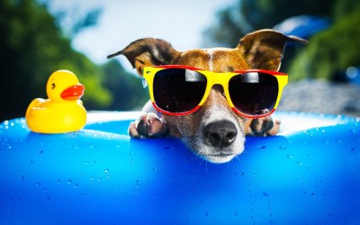 Cool Dog Backgrounds ·① WallpaperTag