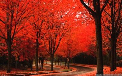 Autumn wallpaper Widescreen ·① Download free amazing High Resolution backgrounds for desktop ...
