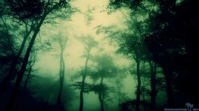 Dark Forest Wallpapers ·①