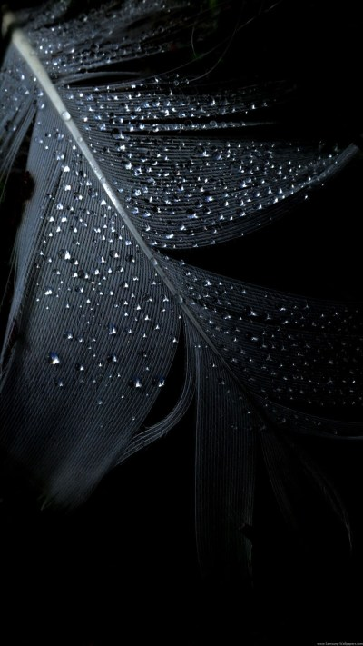 Pure Black wallpaper ·① Download free stunning HD wallpapers for desktop computers and ...