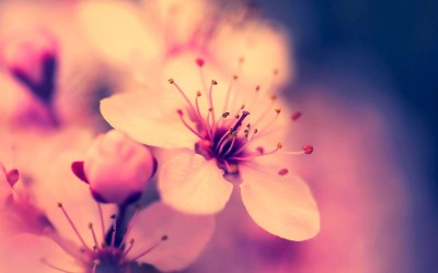 Flower HD Wallpaper ·①