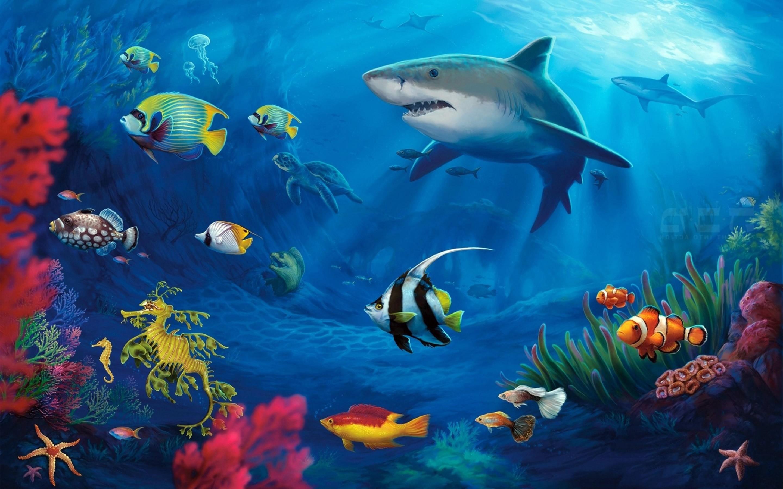 Iphone 5 Clown Fish Wallpaper Ocean Scenes Wallpaper 183 ①
