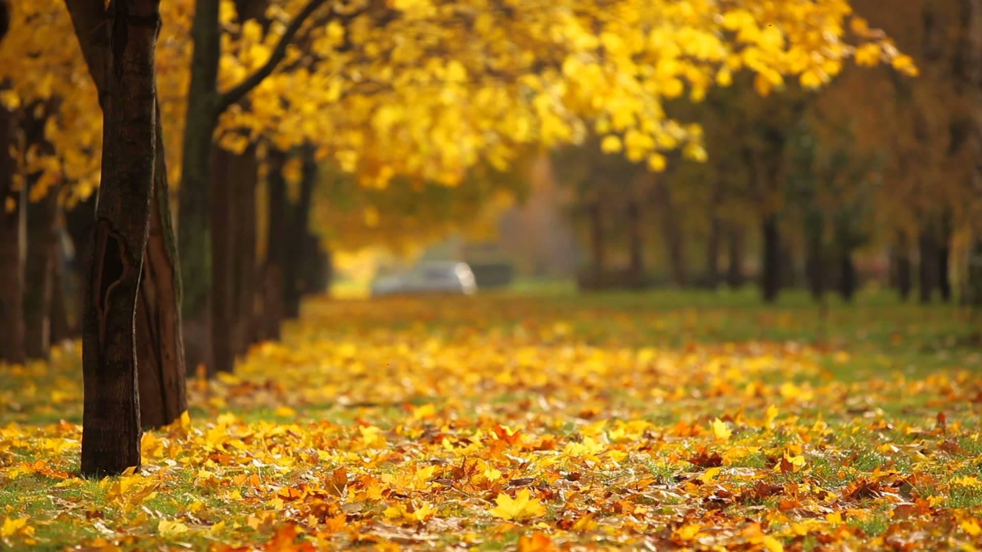 Pretty Fall Iphone Wallpaper Fall Background 183 ① Download Free Stunning Full Hd