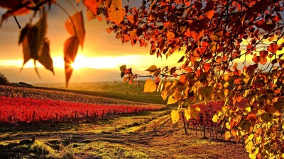 Autumn wallpaper HD ·① Download free wallpapers for desktop, mobile, laptop in any resolution ...