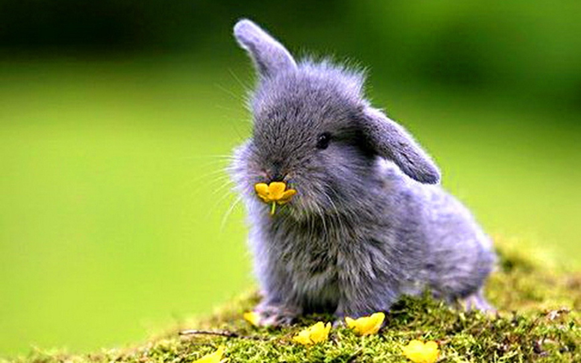 Cute White Baby Rabbits Wallpapers Cute Bunny Wallpapers 183 ①