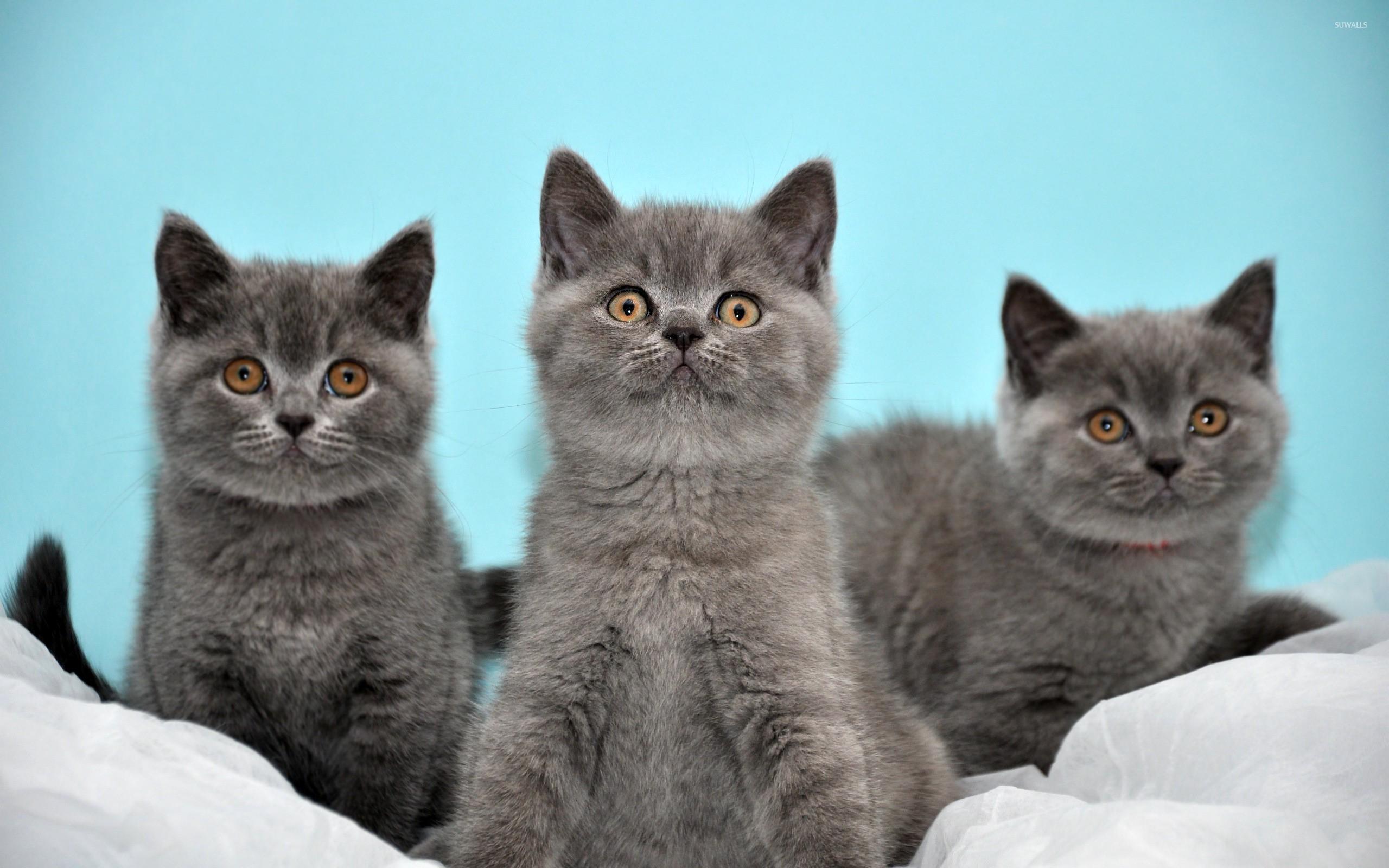Cute Kitten Wallpaper For Ipad Kittens Wallpaper 183 ① Download Free Stunning Full Hd