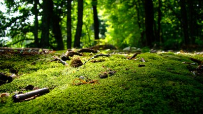Nature Wallpapers 1366x768 ·①