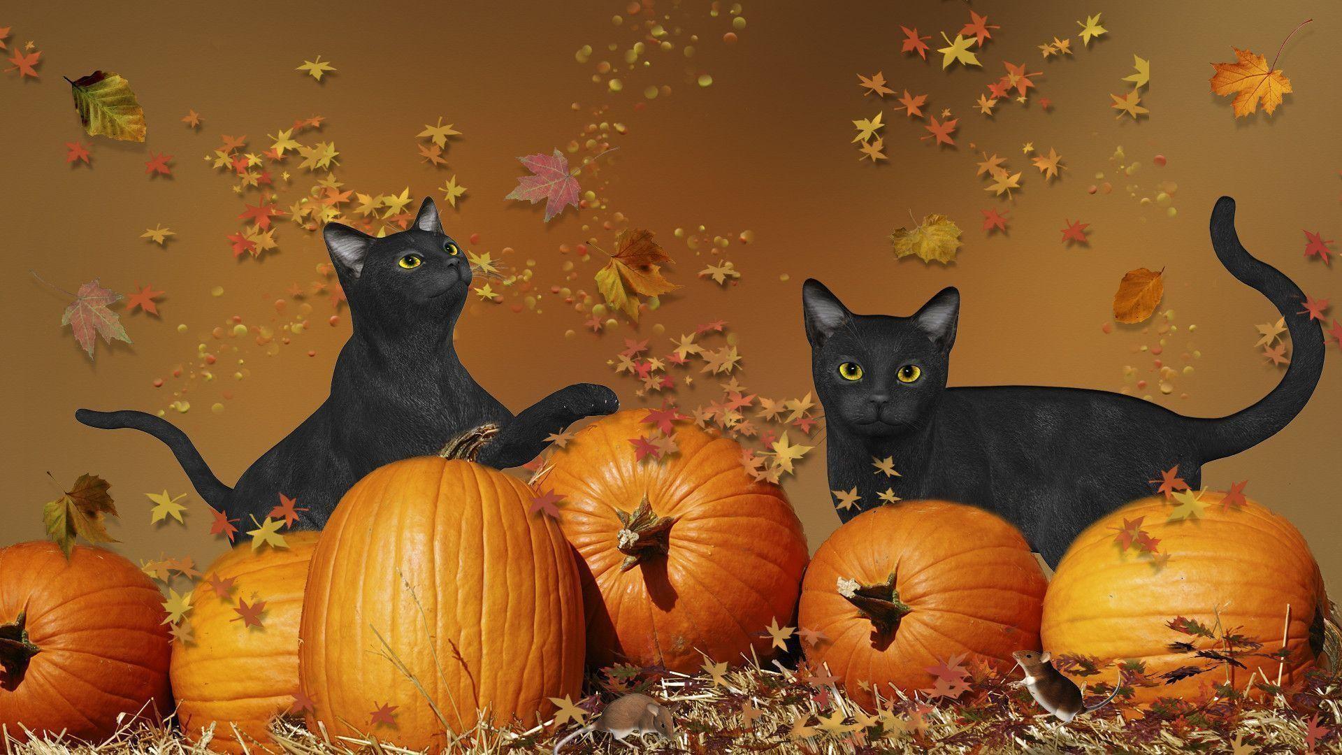 Cute Pumpkin Wallpaper Halloween Cat Wallpaper 183 ①
