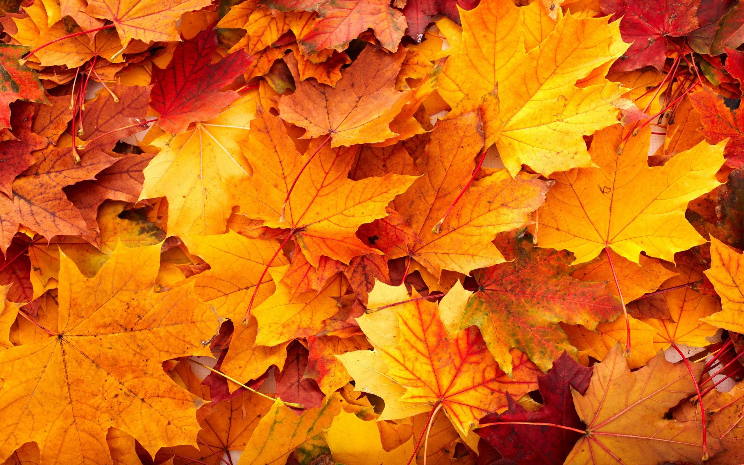 Fall Harvest Iphone Wallpaper Leaf Background 183 ① Download Free Stunning High Resolution