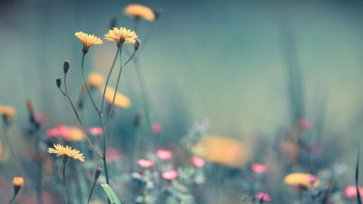 58+ Pretty wallpapers ·① Download free beautiful HD backgrounds for desktop computers and ...