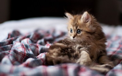 Funny Kittens Wallpaper ·①