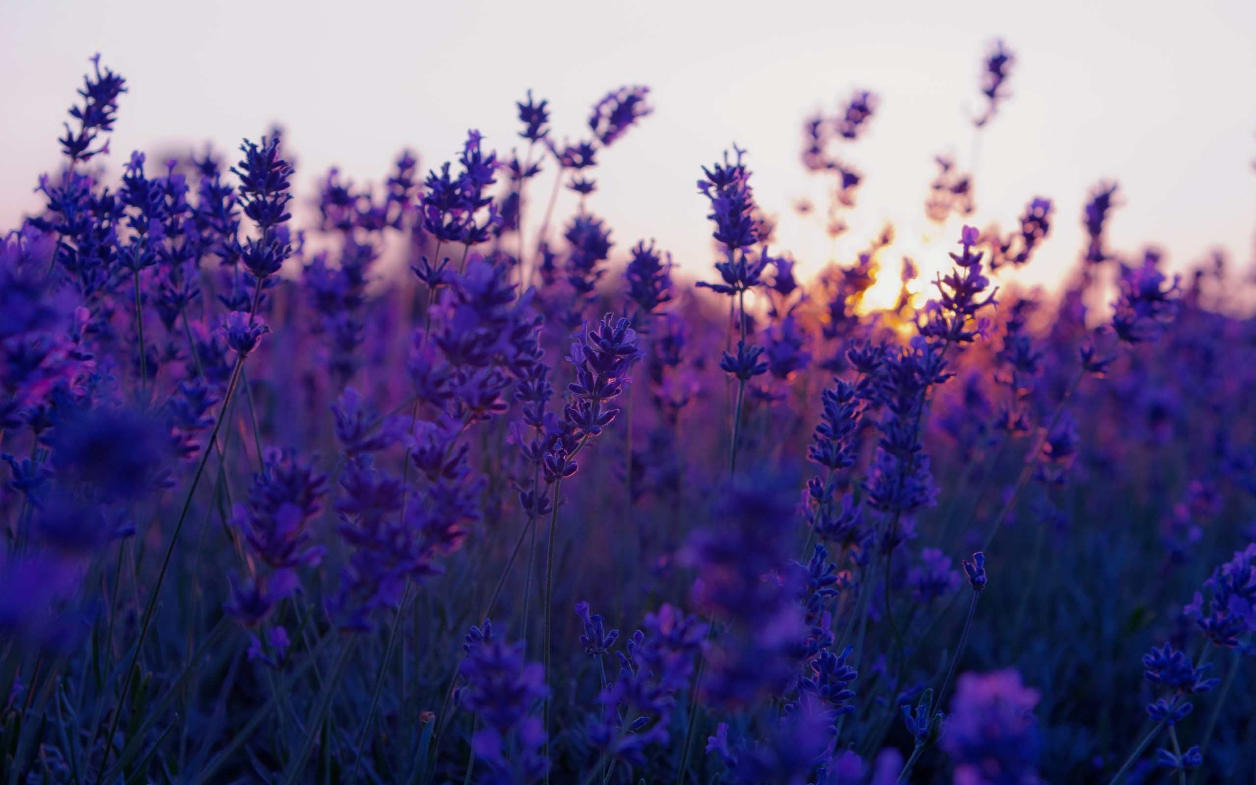 Fall Cell Phone Wallpaper Lavender Background 183 ① Download Free Cool High Resolution