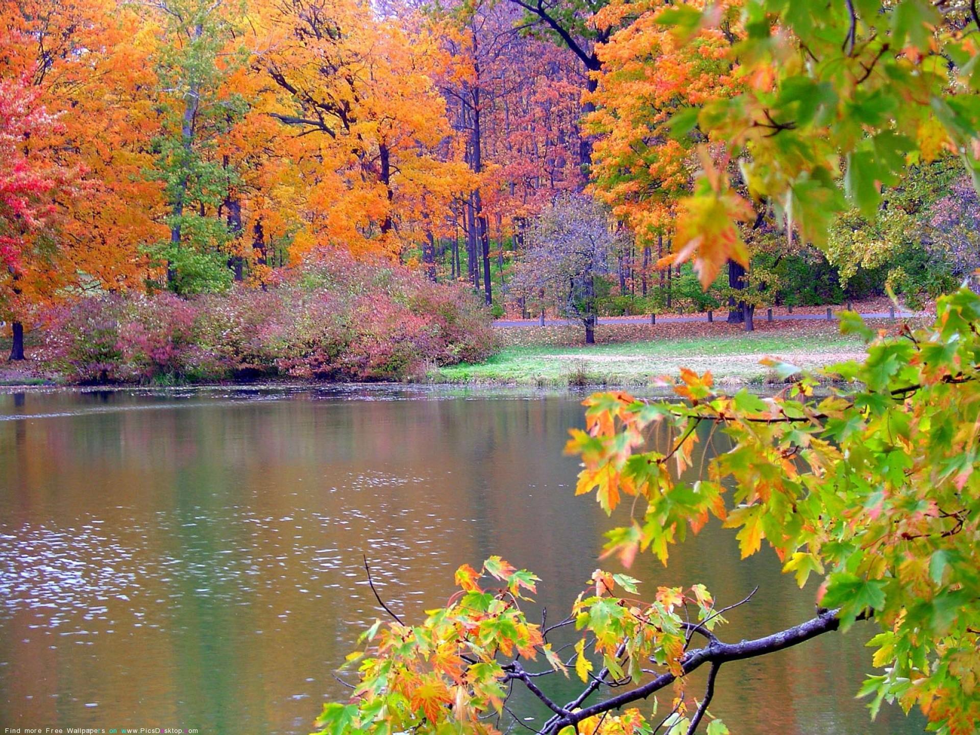 Fall Foliage Wallpaper 1920x1080 Autumn Wallpaper For Desktop 183 ①