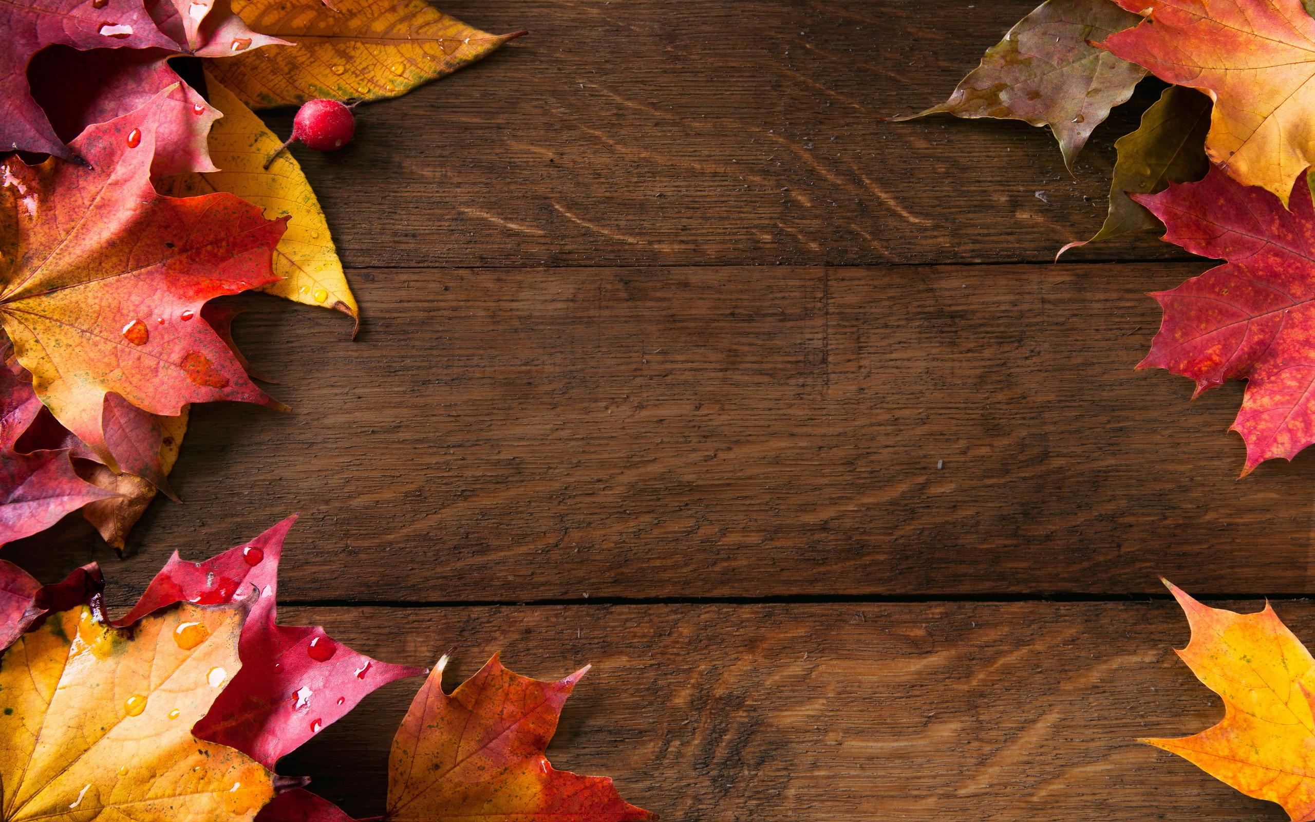 High Resolution Wallpaper Fall Leaves Fall Themed Wallpaper 183 ①