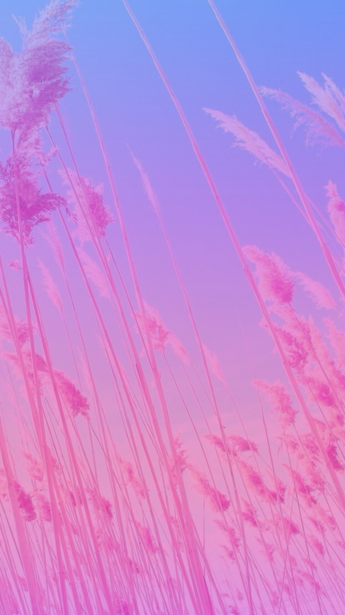 Fall Color Wallpaper For Desktop Purple Flames Background 183 ①