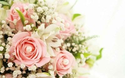 White Roses Background ·①