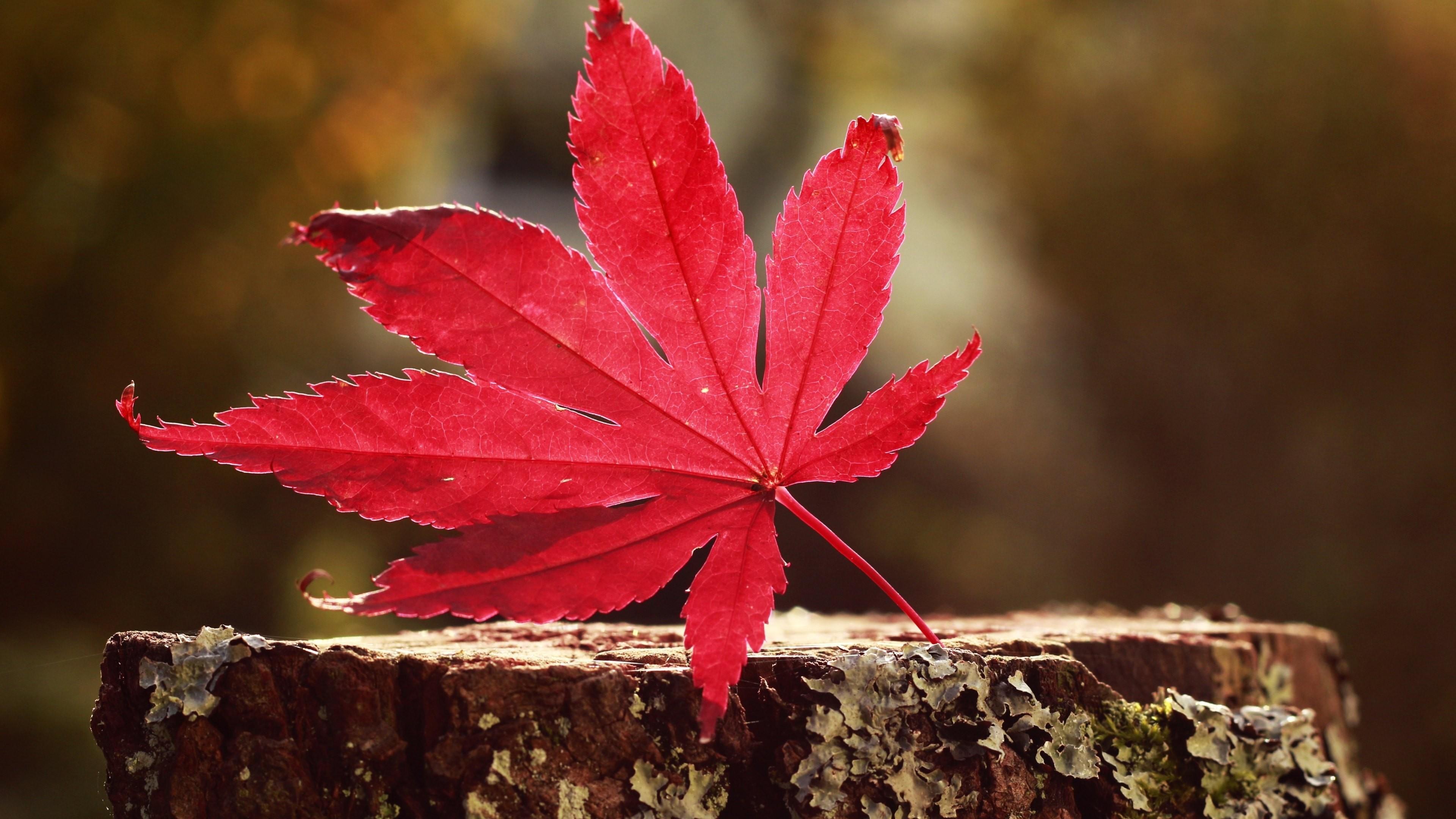 Fall Leaf Iphone Wallpaper 45 Ultra Hd Wallpapers 8k 183 ① Download Free Beautiful Full