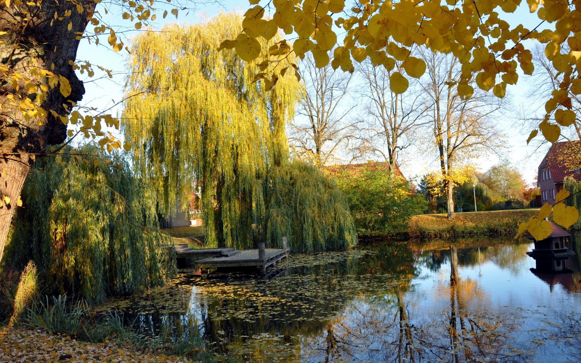 Fall Colors Wallpaper 1920x1080 Weeping Willow Wallpaper 183 ①