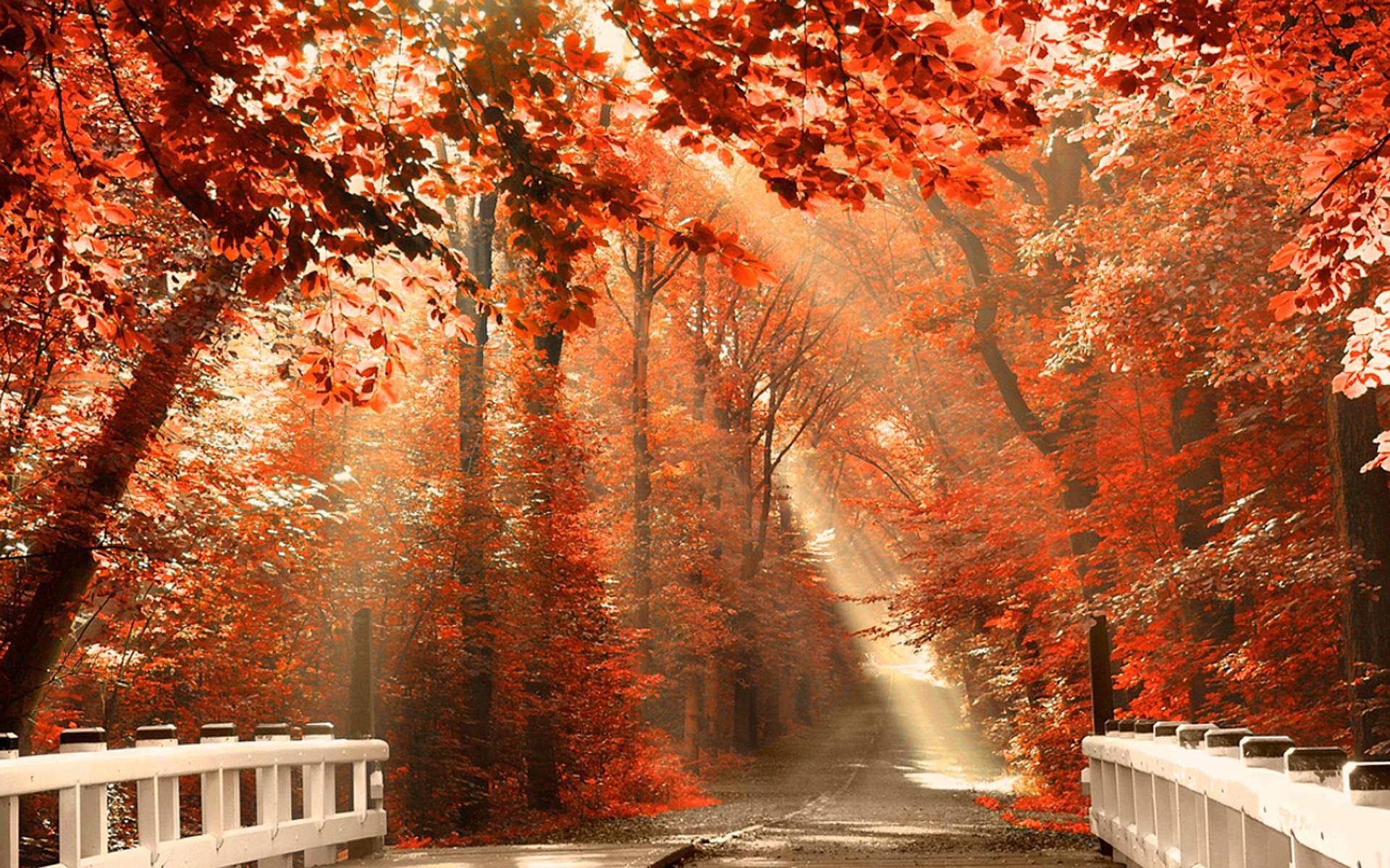 Fall Trees Iphone Wallpaper Desktop Background Fall 183 ①
