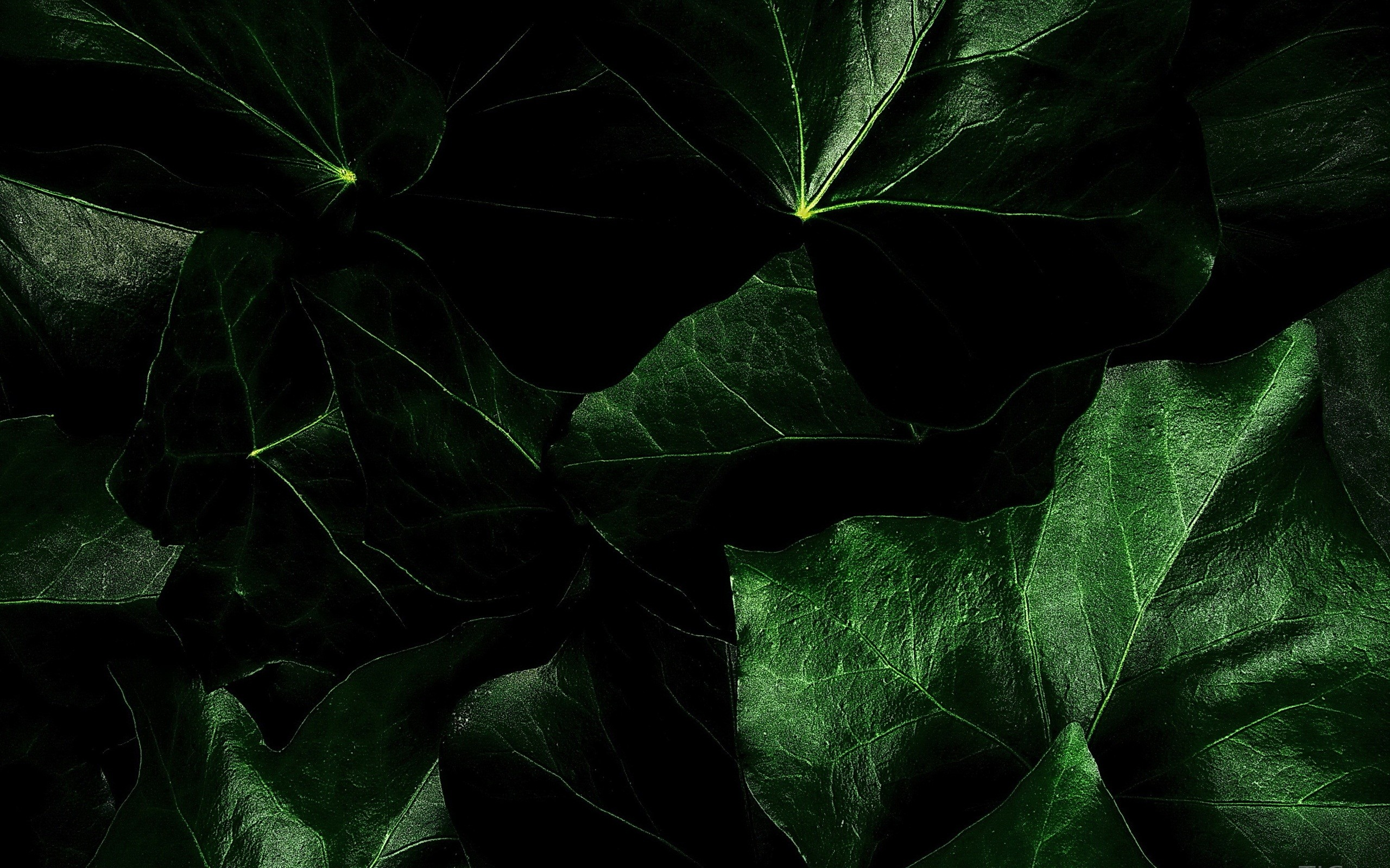Fall Leaves Hd Wallpapers 1080p Dark Green Background 183 ① Download Free High Resolution