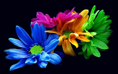 Colorful Flower Wallpaper ·①