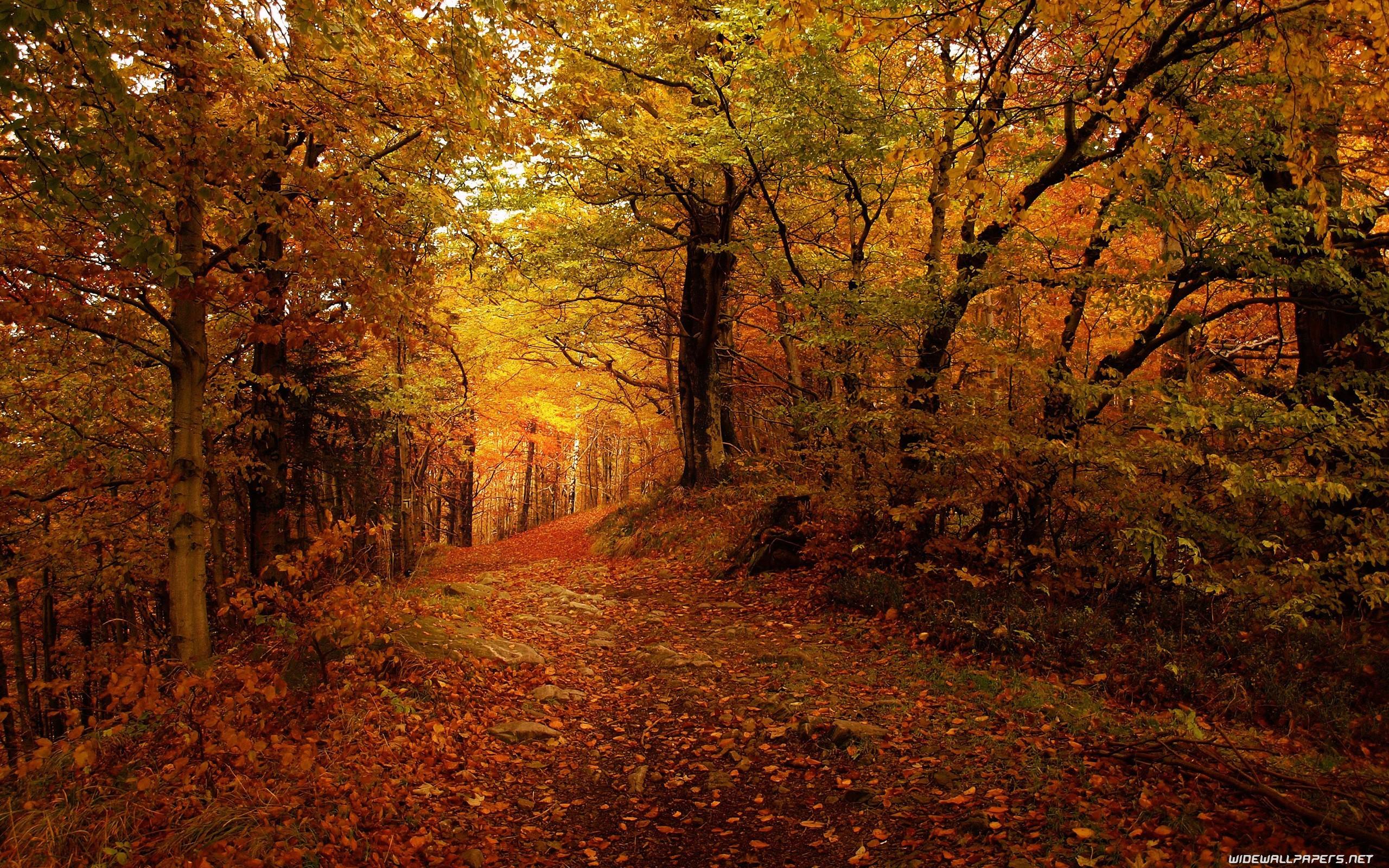 Fall Leaves Ipad Wallpaper Autumn Desktop Wallpaper 183 ① Download Free Stunning Full Hd