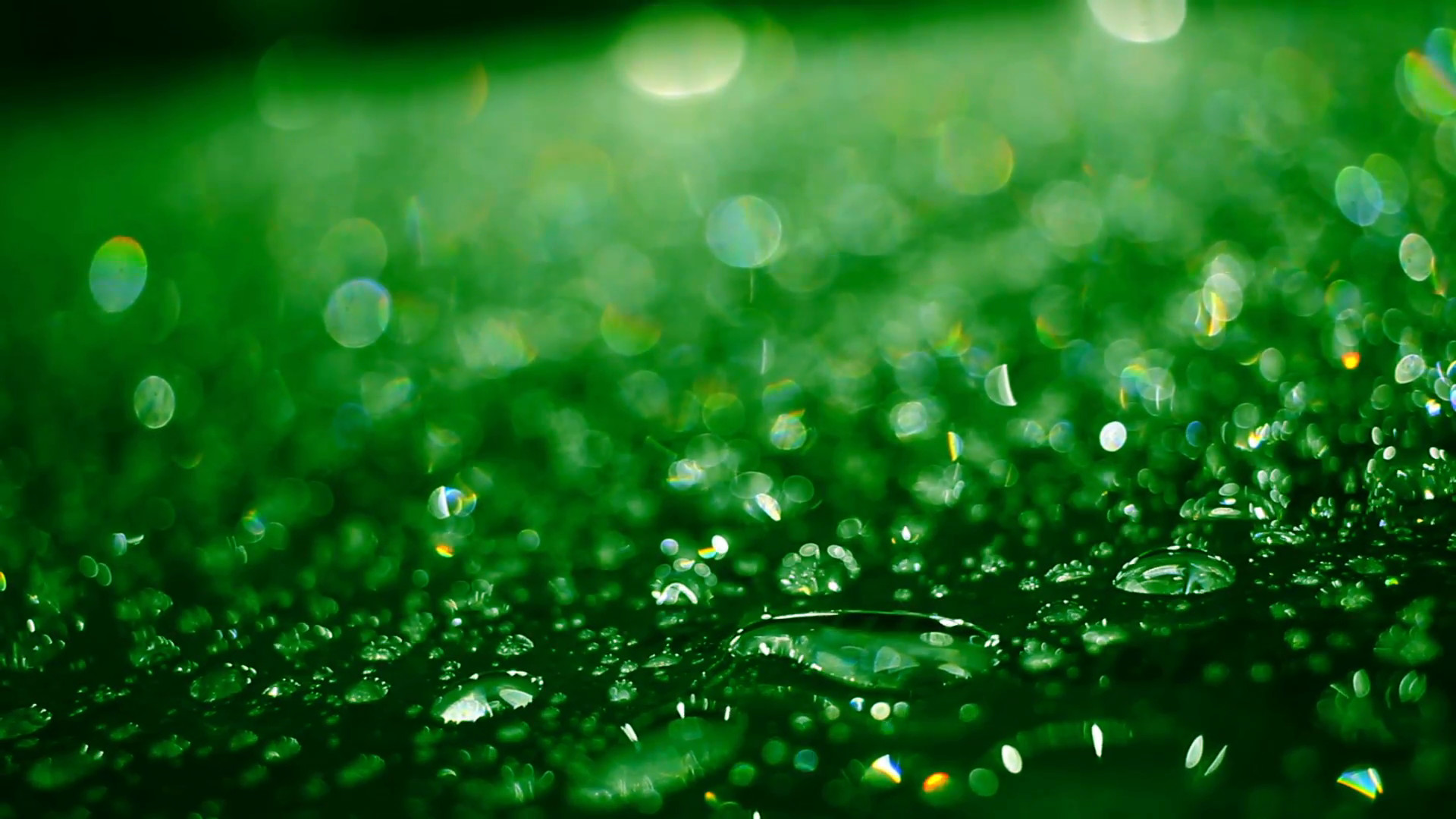 Drop Of Water Falling From A Leaf Wallpaper Water Droplet Background 183 ①