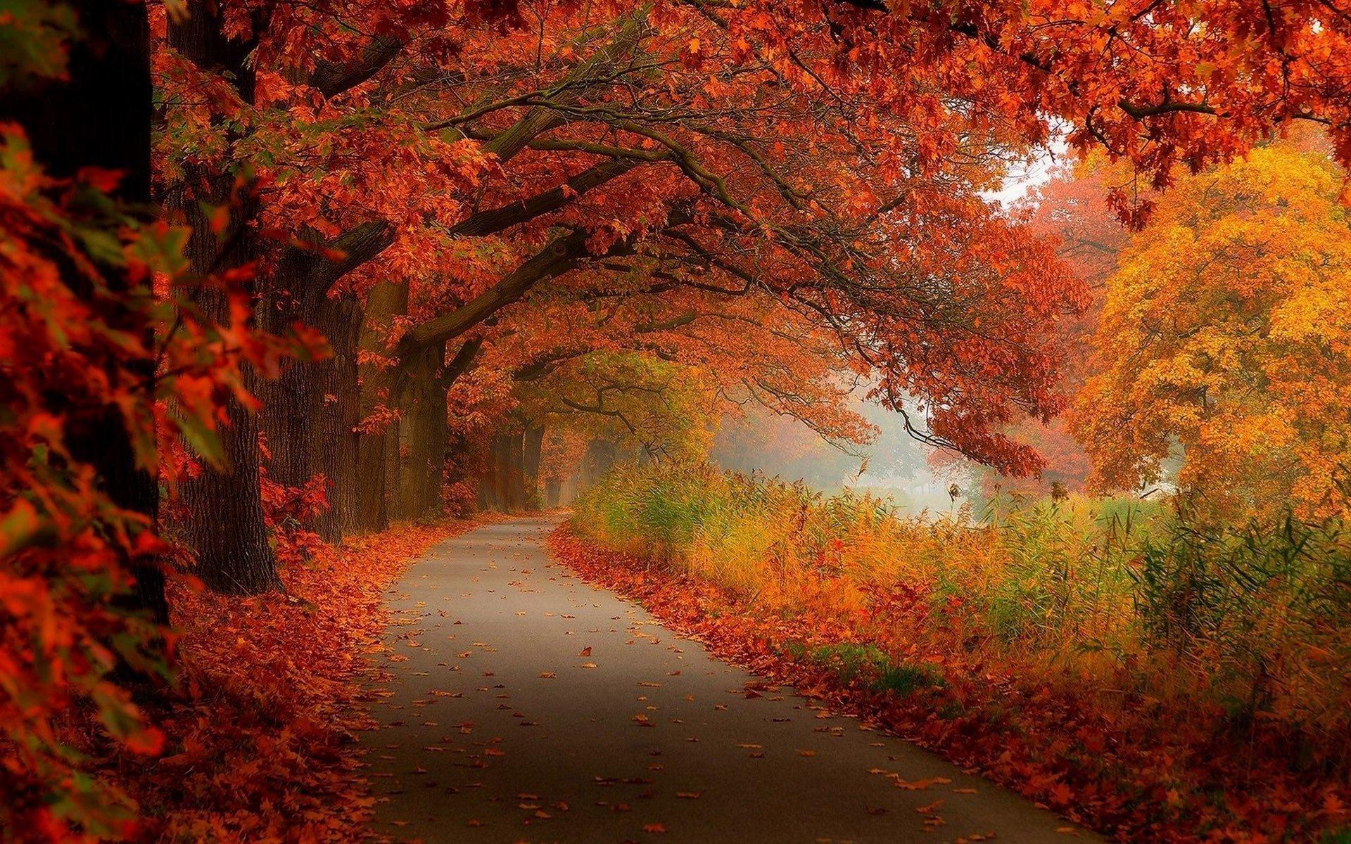 Fall Leaves Falling Wallpaper Fall Scenery Wallpapers 183 ①
