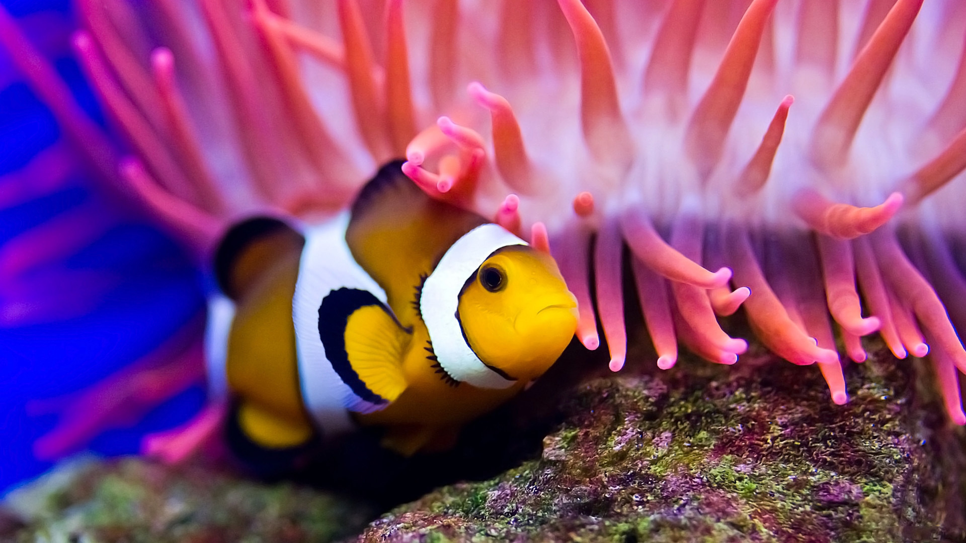 Apple Clownfish Wallpaper Iphone X Clown Fish Wallpaper 183 ①