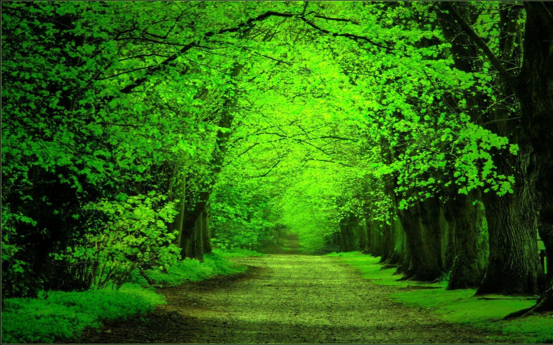 Occult Wallpapers Hd Green Forest Background 183 ①